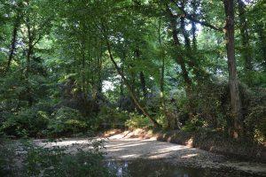 Parco Jappelli alla Villa Wollembirg di Loreggia